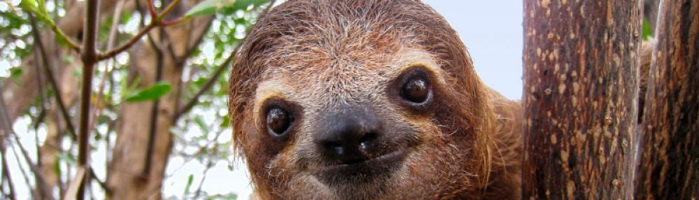 Peak Sloth